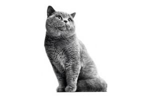 Повседневные корма для кошек Роял Канин (0)