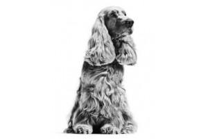 Ветеринарные диеты для собак Роял Канин (18)