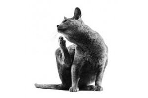 Ветеринарные диеты для кошек Роял Канин (2)